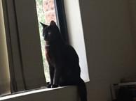 Ralph photo 9.jpg