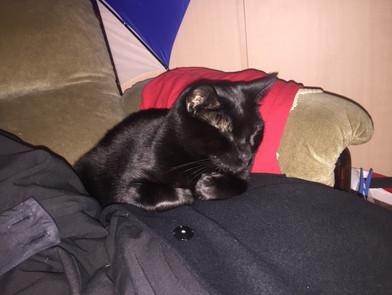 Ralph photo 11.jpg
