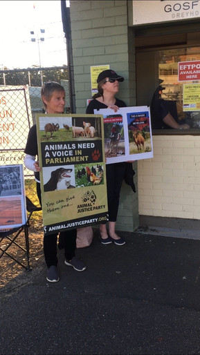 Protest against the camel races