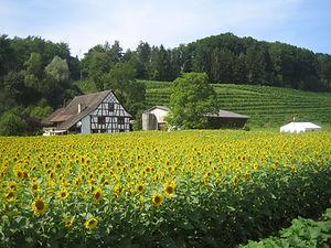 Egghof Weinbau