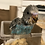 Thumbnail: Parakeets
