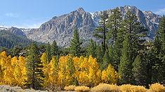 Aspen Meadows Downcanyon