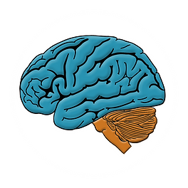 Brainstem3.png