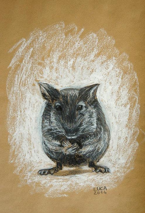 Maus, Zeichnung, Ölpastell, Graphit, Ioana Luca, Tiere