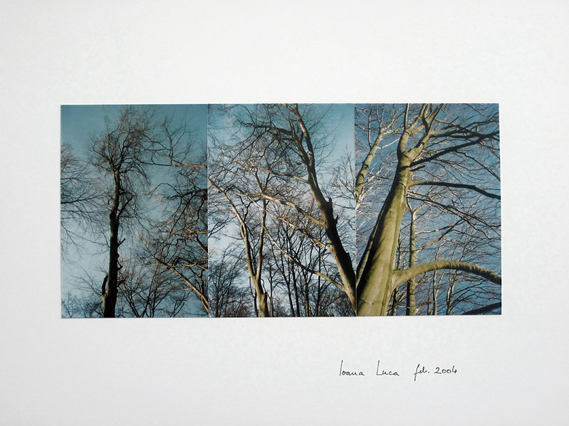 Fotocollage Ioana Luca, Wald, Bäume, Winter, Natur