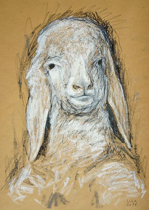 Lamm, Schaf, Zeichnung, Ölpastell, Graphit, Ioana Luca, Tiere