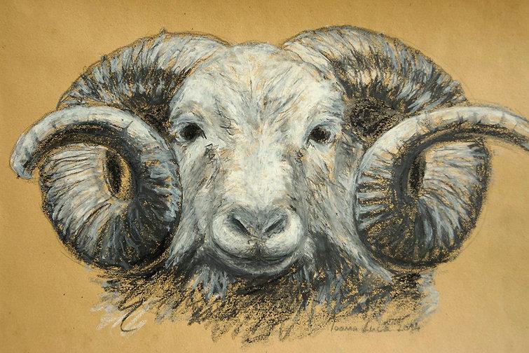 Zeichnung, Ölpastell, Graphit, Ioana Luca, Tiere, Schafbock