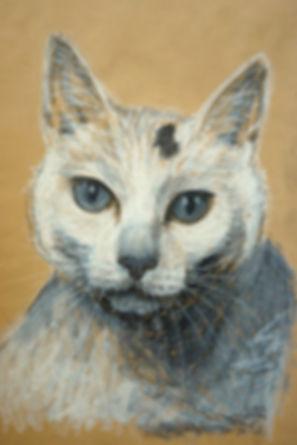 Zeichnung, Ölpastell, Graphit, Ioana Luca, Tiere, Katze