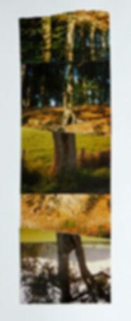 Fotocollage Ioana Luca, Natur, Bäume, Feld, Herbst