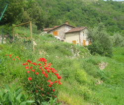 Boschi houses in spring time
