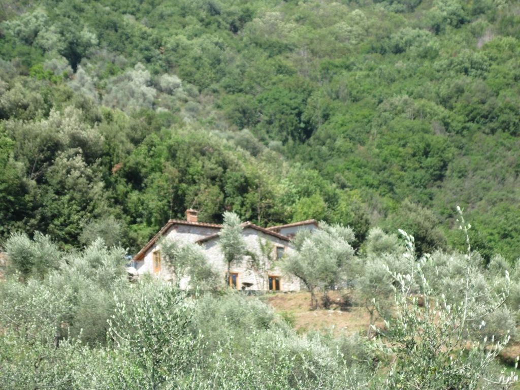 Boschi houses