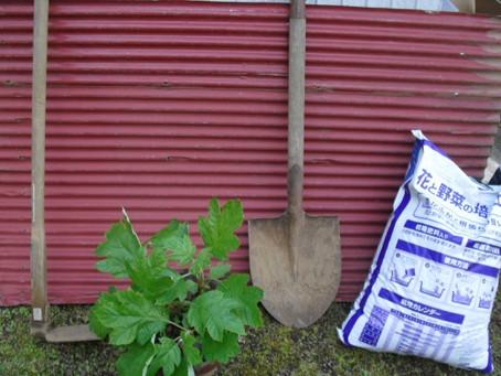 植物を地面に植えてみよう!(初心者に向けて)