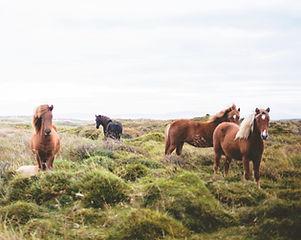 内モンゴル ハイラル 馬