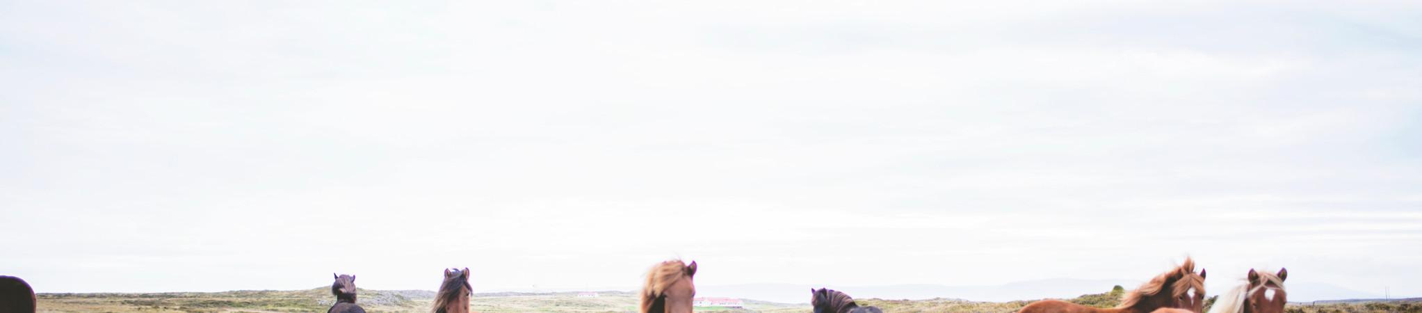 Chevaux sauvages sur la Prarie