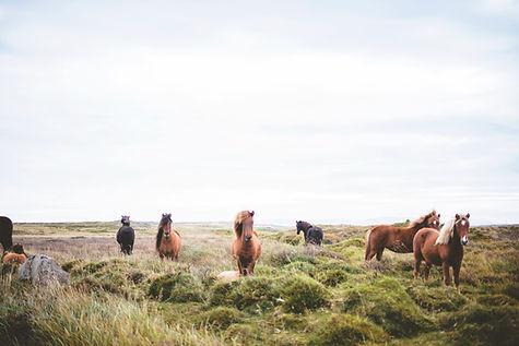 Prarie上の野生の馬