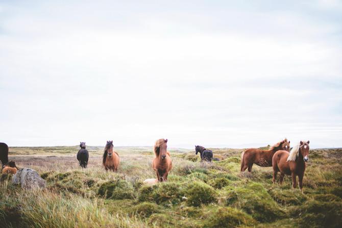 Mountain Valley Horse Rescue: CO Yoga + Life Magazine