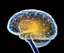 Hier erkennt man ein Gehirn. Es ist sehr hochauflösendet dargestellt und durch Farben gepimpt.