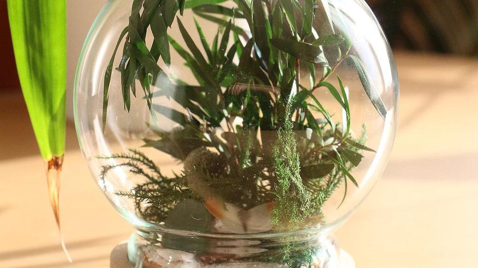 Terrarium Zen - Hauteur 12 cm