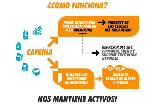 como funciona la caféina