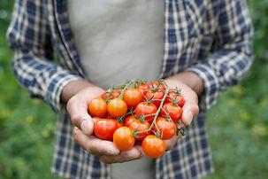 Faire des économies et manger équilibré avec les paniers de légumes locaux
