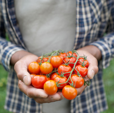 Protect Your Tomatoes From Blossom End Rot