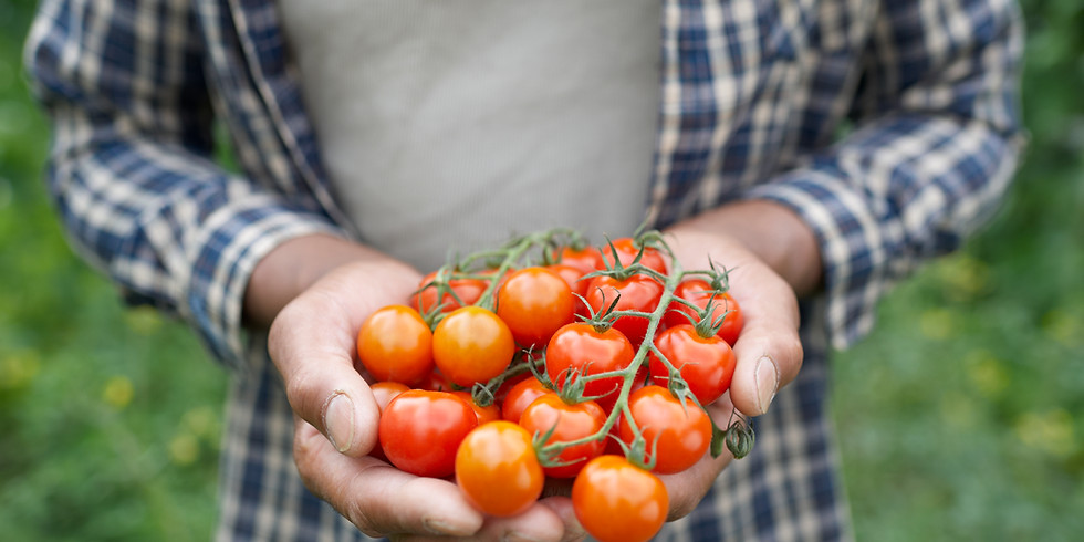 Raising Tomatoes in the North Country