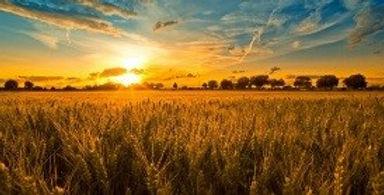 Harvest Picture 1.jpg