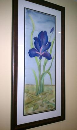 Iris Silk