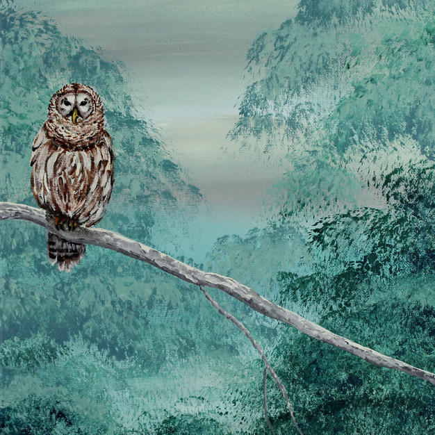 Winter Barred Owl