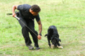 Craig Ogilvie Demonstrating Play Techniques with Labrador