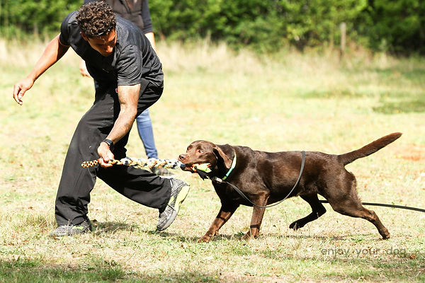 Craig Ogilvie Demonstrating Play Techniques with Chocolate Labrador