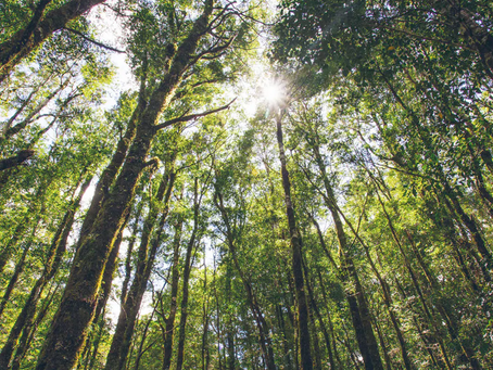 The beginner's guide to immune-boosting 'forest bathing'