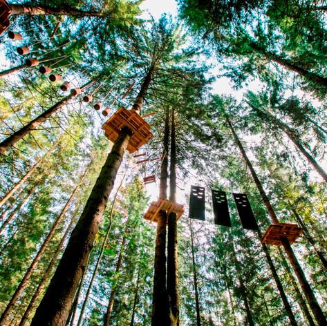 Allgemein Kletterpark Waldfoto.jpg