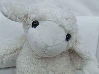 lamb-3.jpg