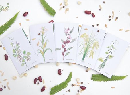 Lì xì hạt giống - Một ý tưởng của GIEO