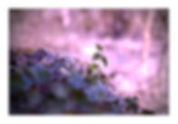 nature 2.jpg
