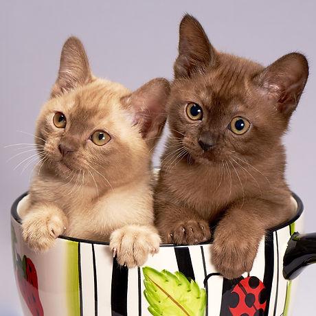 cat-3269765_1920.jpg