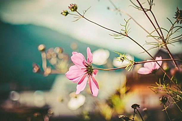 fleur.webp