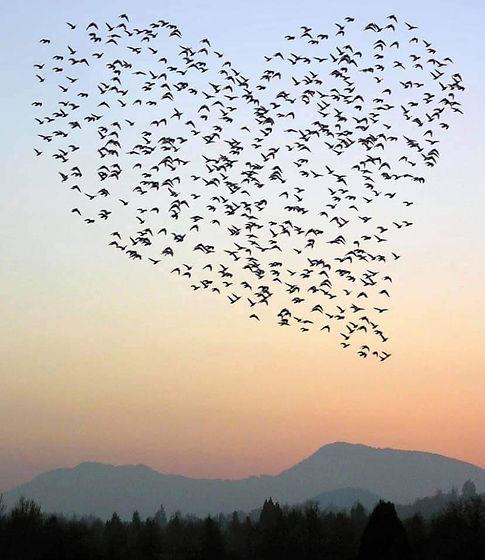 oiseaucoeur.jpg