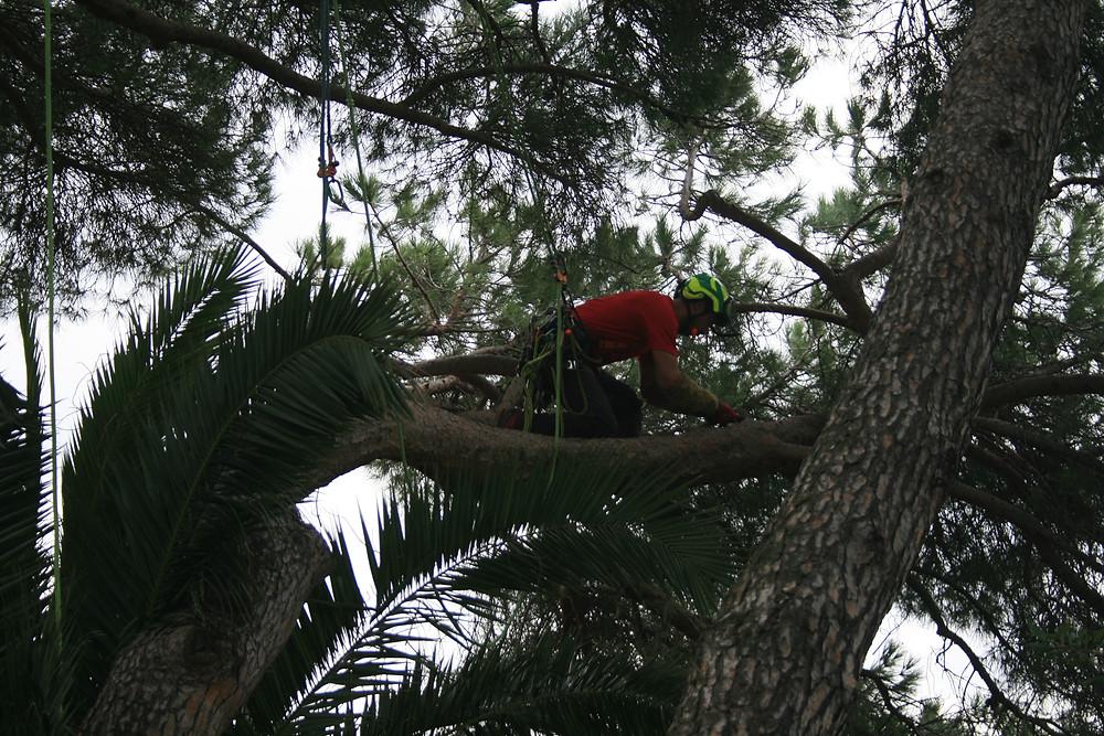 Arboriste grimpeur L'arboristerie