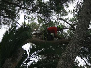 Arboristes Grimpeurs