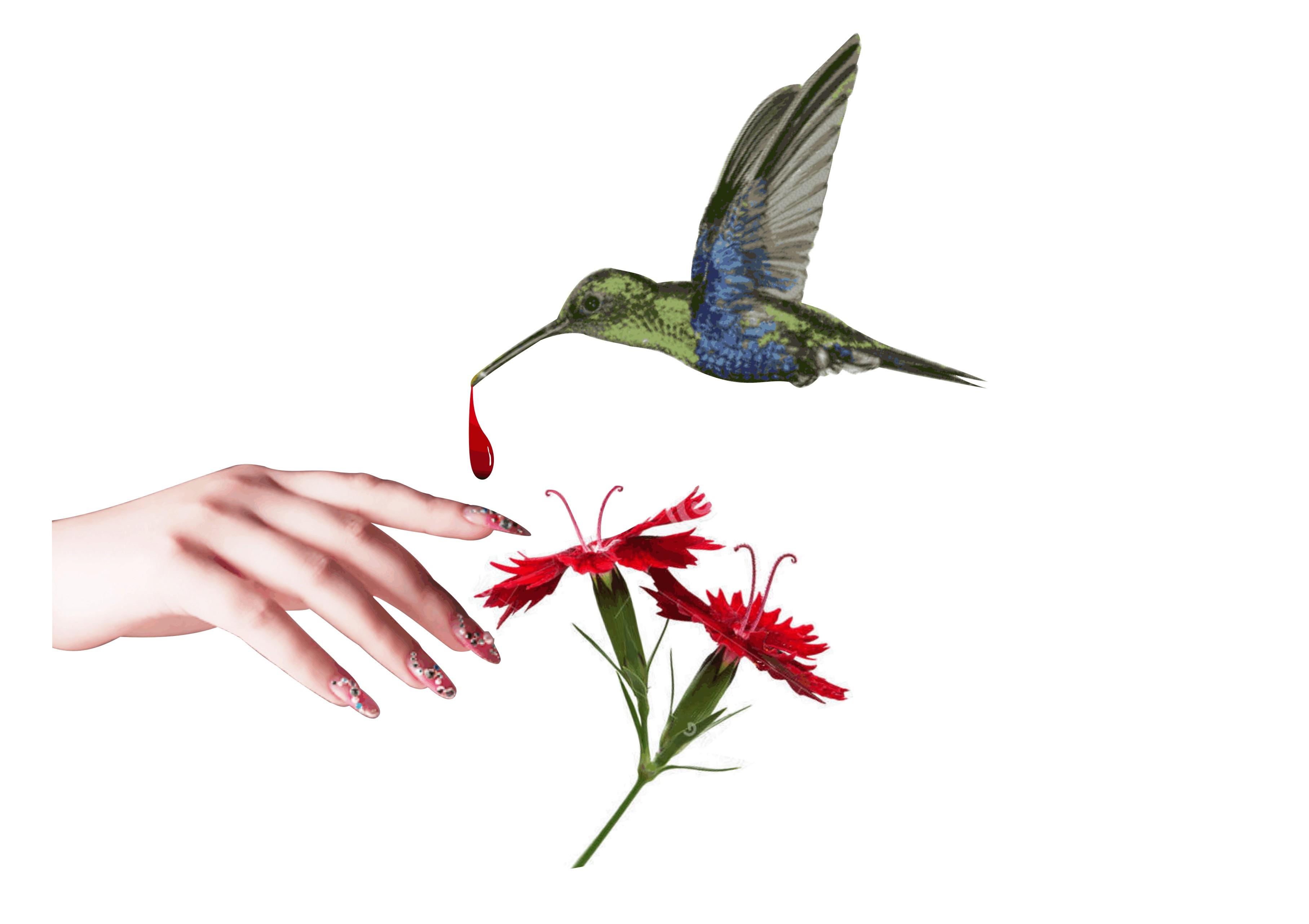 harmony für hände und füsse