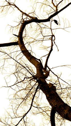wooden dendrites 2 featuring Crow