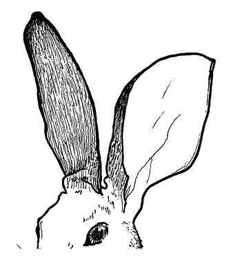 Rabbit Head Banner(Right).png