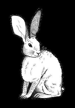 Rabbit Banner.png