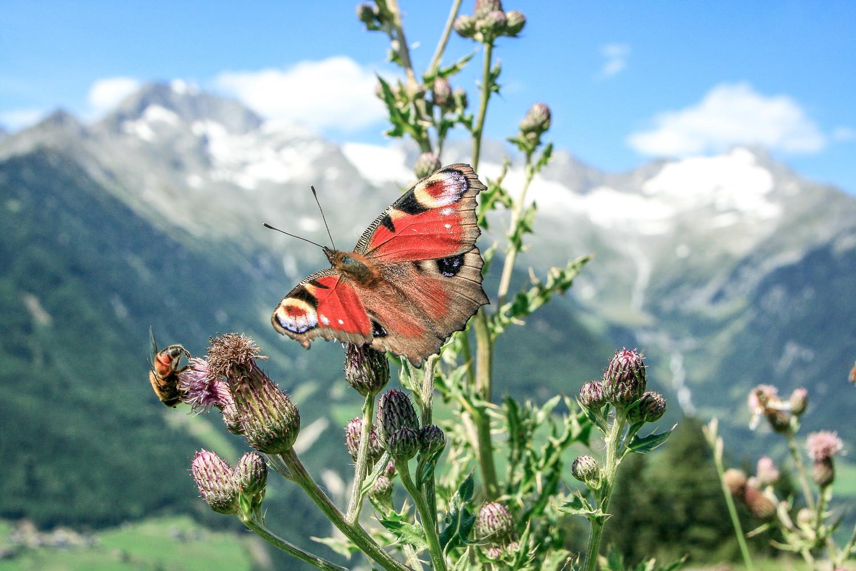 schauinstal_Schmetterlinge vor Hof.jpg
