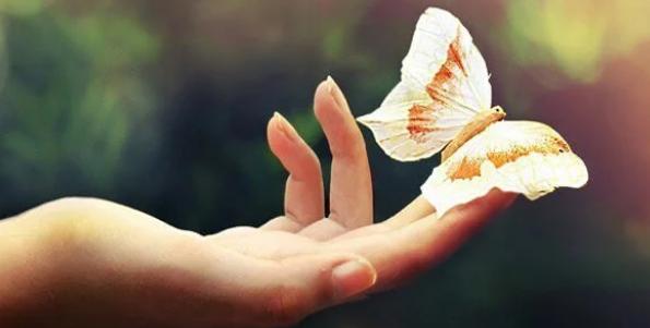 Une main ouverte tient un papillon au bout des doigts