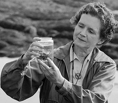 Rachel Louise Carson sur le terrain, examine un échantillon d'eau marine dans un bocal