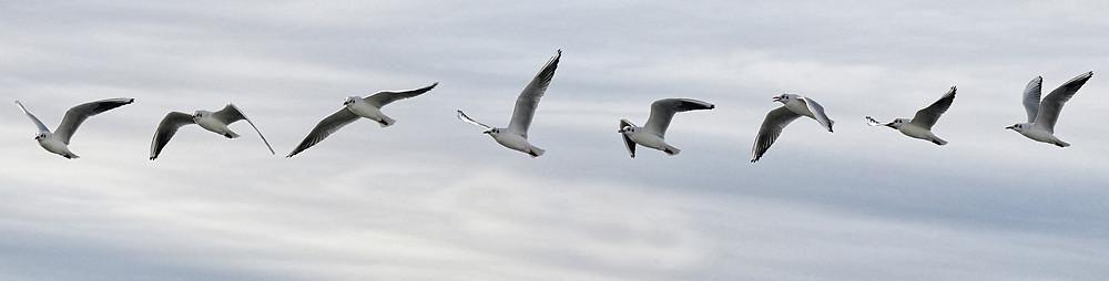 Envol d'oiseaux en plein ciel