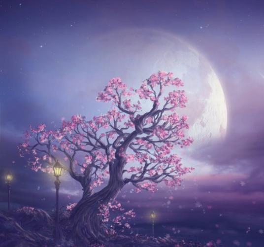 Pleine Lune derrière arbre aux fleurs roses sur fond mauve